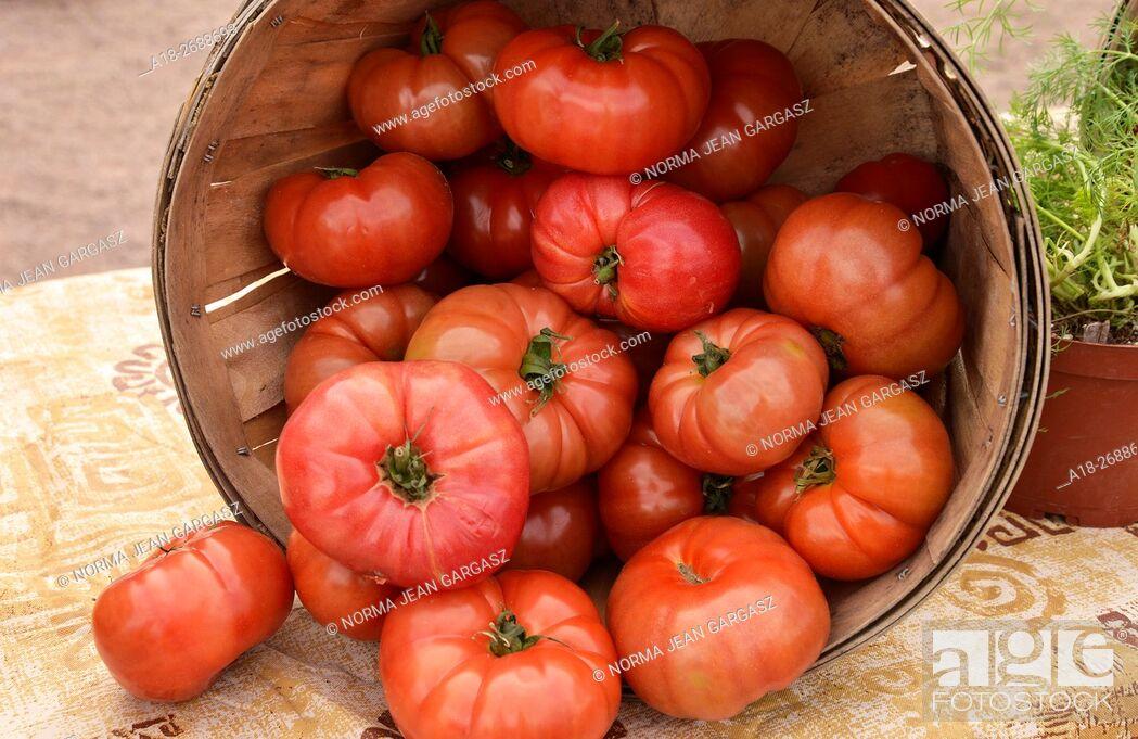 Stock Photo: Tomatoes, Farmers Market, Tucson, Arizona, USA.