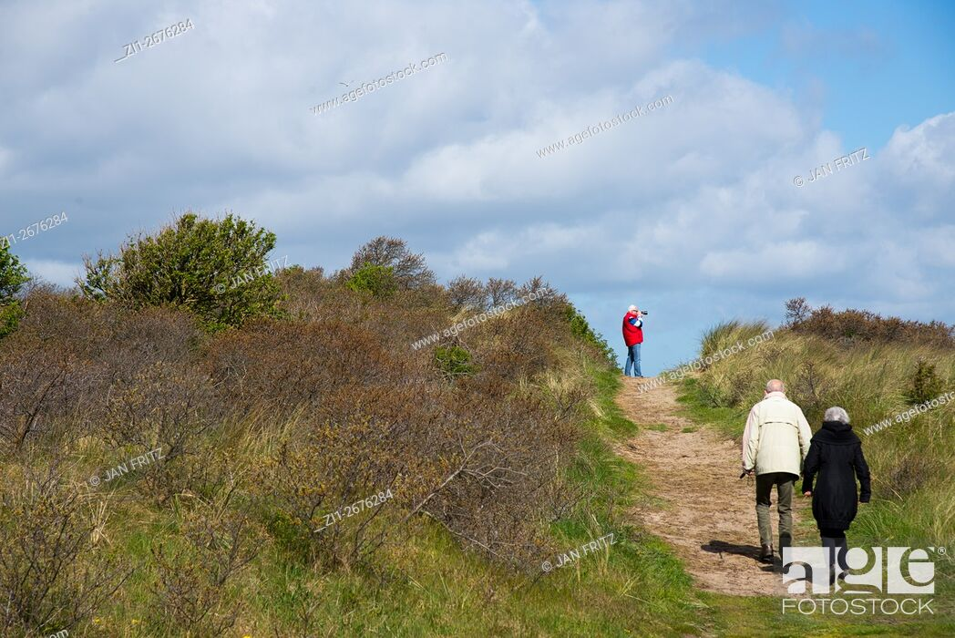 Stock Photo: older couple walking at sandy path in the dunes of Texel.