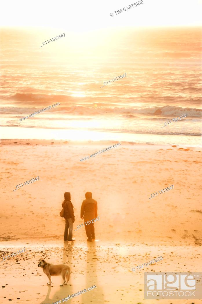 Stock Photo: couple walking dog, Cleveleys, lancashire, blackpool fylde, coast, england, uk, europe.