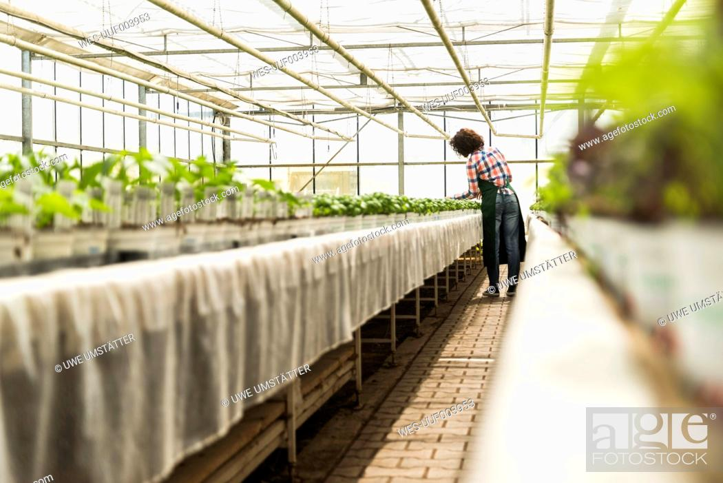 Stock Photo: Young female gardener working in plant nursery.