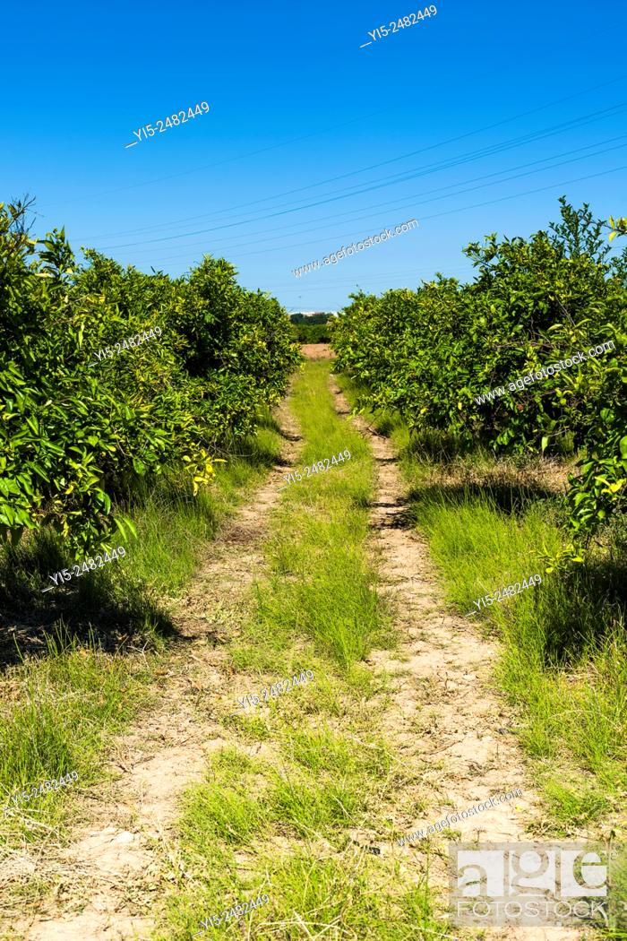Stock Photo: Path. Field. Huerta Valencia. Spain.