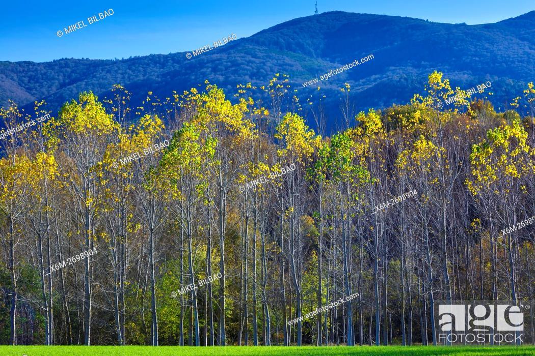 Stock Photo: meadow and poplar grove. Maeztu. Alava, Basque Country, Spain, Europe.