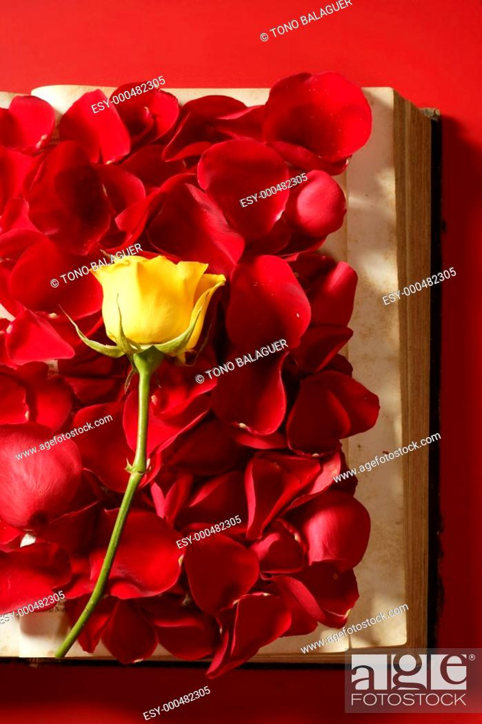 Photo de stock: Rose petals over old aged book, red background.