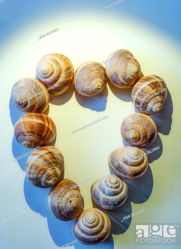 Imagen: Snail Shells forming a Heart Shape.