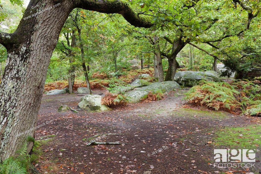 Stock Photo: Forest of Fontainebleau, Seine-et-marne, Ile de France, France.
