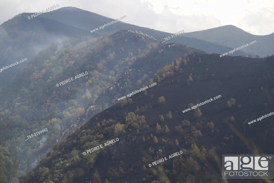 Stock Photo: Lugo. Forestry fire. The high temperatures, the drought, and the strong wind (Ophelia), causes many forests of Galicia to burn.