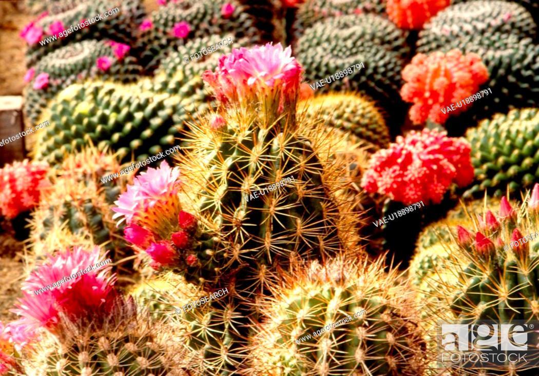 Stock Photo: flowers, nature, flower, cactus flower, scene, wildflower, landscape.