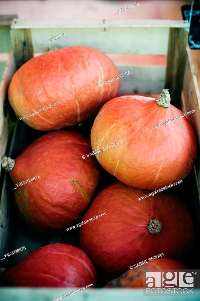 Stock Photo: Potimarron, Pumpkins. Farmers market.