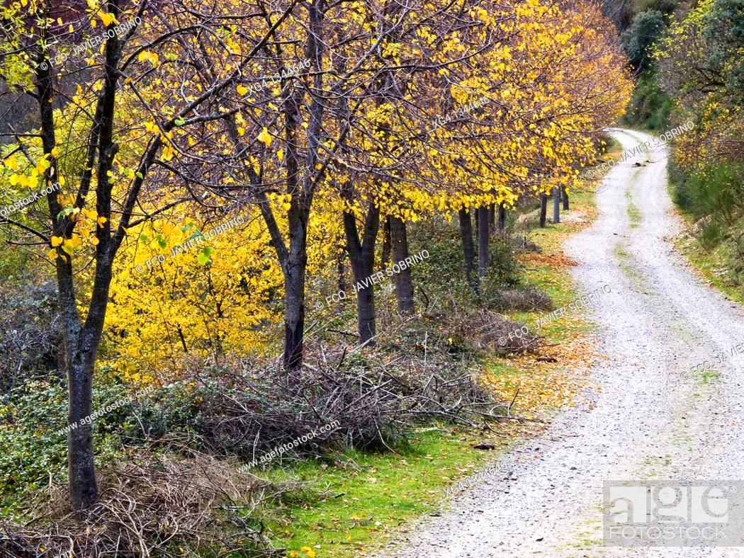 Stock Photo: Pista forestal en otoño en el Valle de Valvanera - Anguiano - Sierra de la Demanda - La Rioja - España.