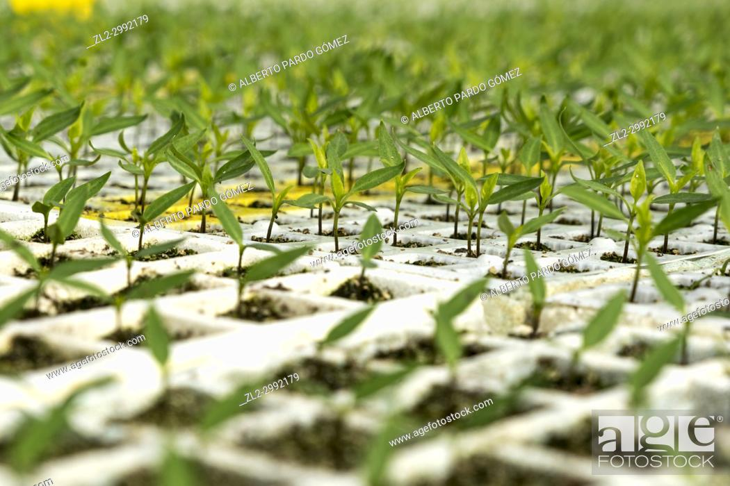 Stock Photo: greenhouse plants. Valencia.