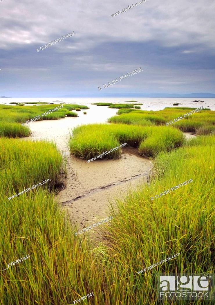 Stock Photo: Low-Tide.