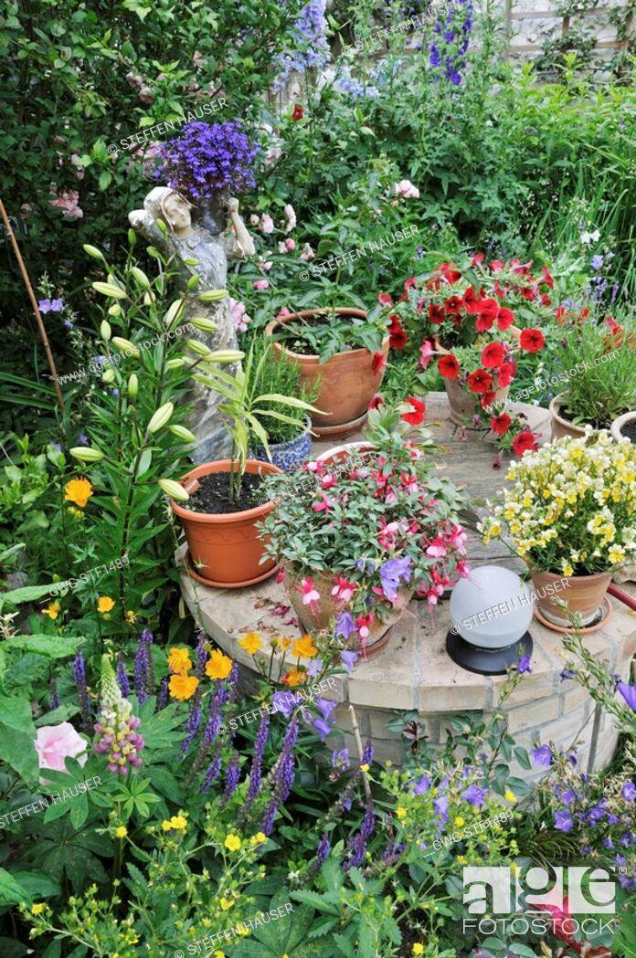 Lobelia Fuchsia Nemesia Petunia In A Backyard Garden Design