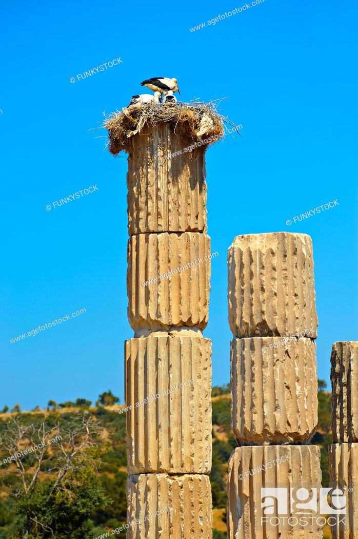 Stock Photo: The Hellanistic Ionic columns of the Apollo Smintheion Sanctuary with Storks nesting ontop, near Gulpinar Village Turkey.