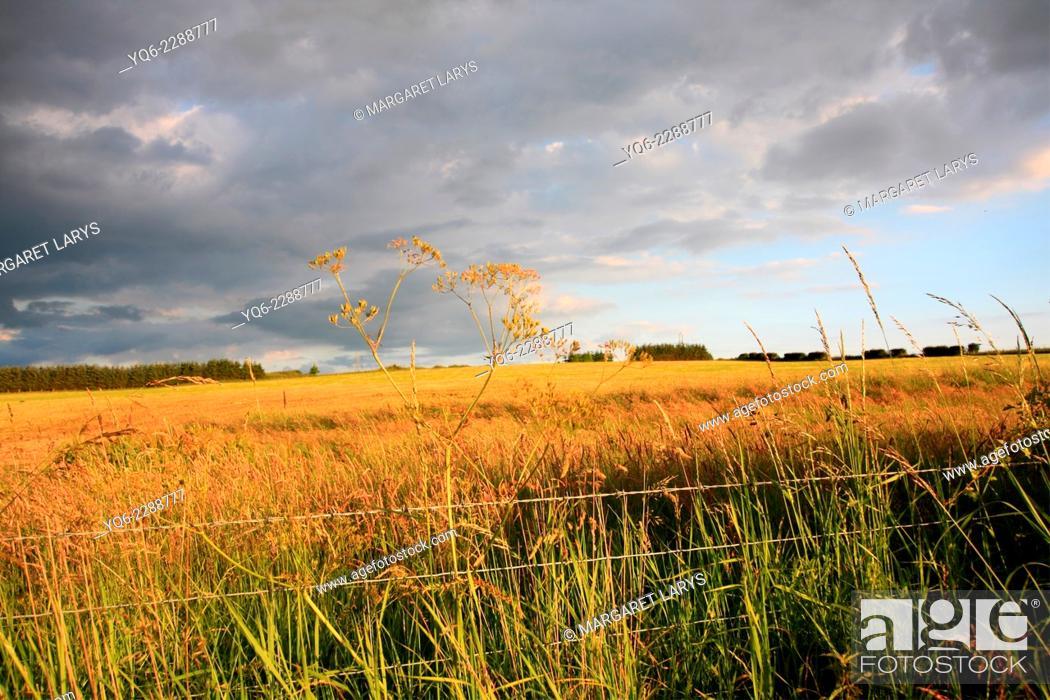 Stock Photo: Beautiful summer fields in golden sunlight in Scotland.