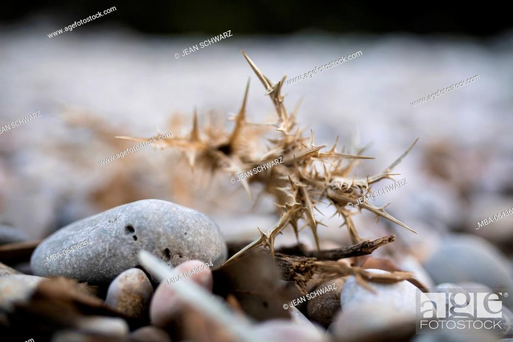 Stock Photo: dried up plant on the beach, Croatia.