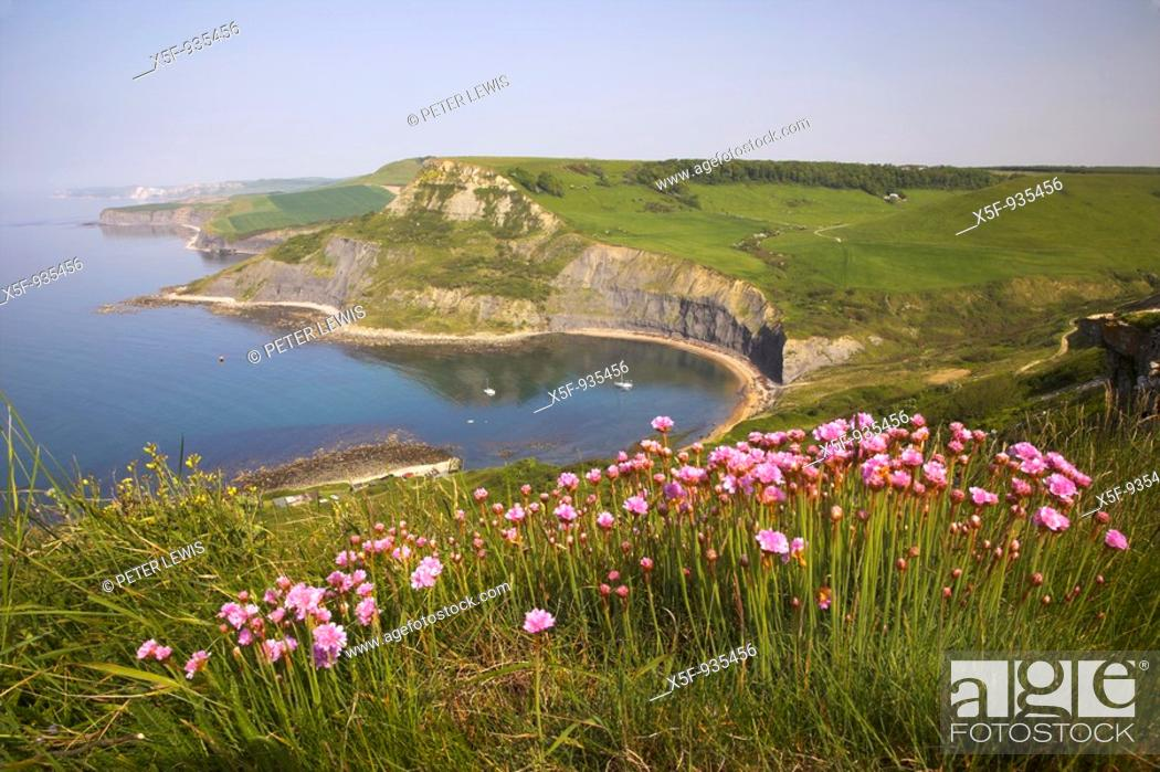 Stock Photo: View of Chapmans Pool and Egmont Point with Kimmeridge in the distance and Thrift in the forground Dorset.
