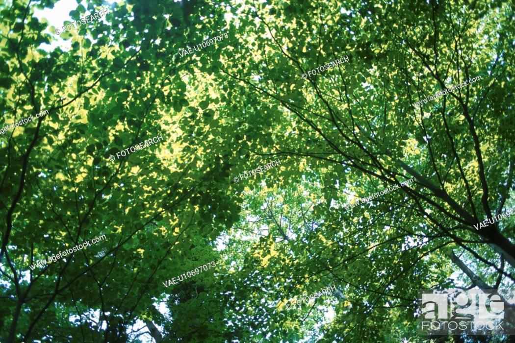 Stock Photo: Sunlight Through Leaves.