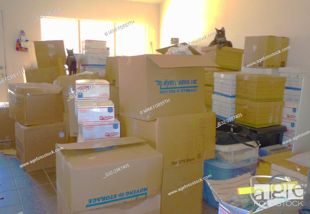 Stock Photo: moving day, boxes. And cats. New Mexico.