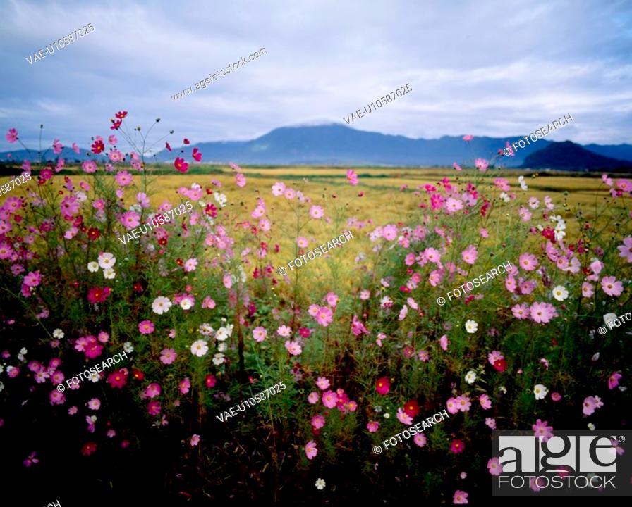 Stock Photo: sky, nature, field, mountain, scene, cloud, landscape.