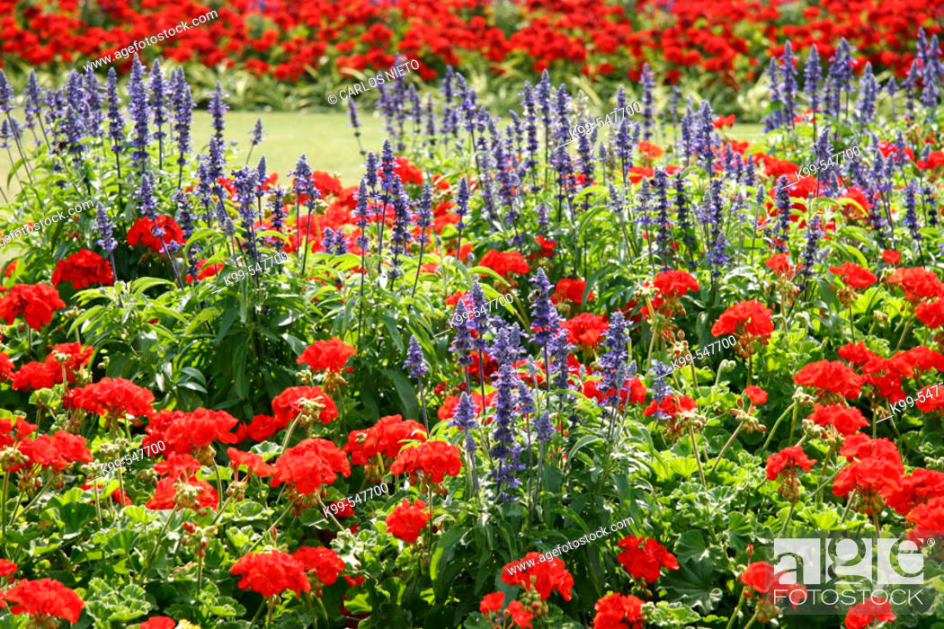 Stock Photo: Garden with flowers.
