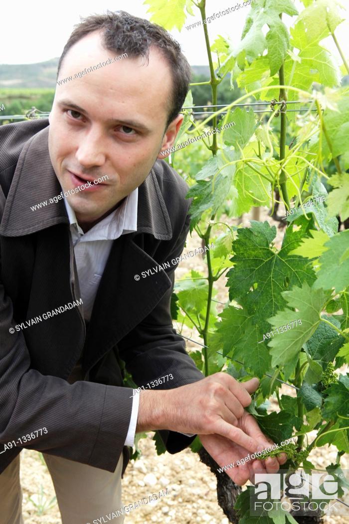 Stock Photo: Spain, Basque Province Euskad, La Rioja Alavesa, Elciego, tempranillo vineyards and cellars Vina Salceda.
