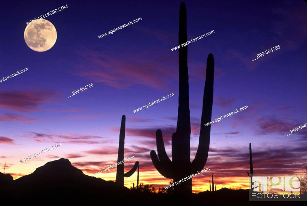 Stock Photo: Scenic Saguaro Cactus, Saguaro National Monument Arizona, Usa.