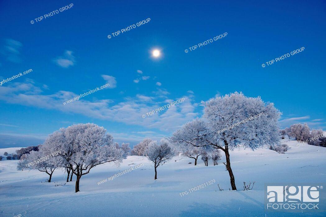 Stock Photo: Bashang grasslands;Hebei;China.