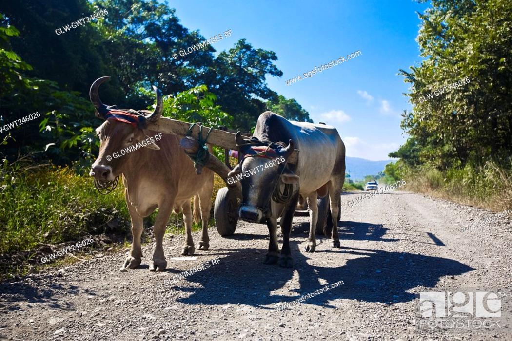 Stock Photo: Ox cart on a dirt road, Tamasopo, San Luis Potosi, Mexico.