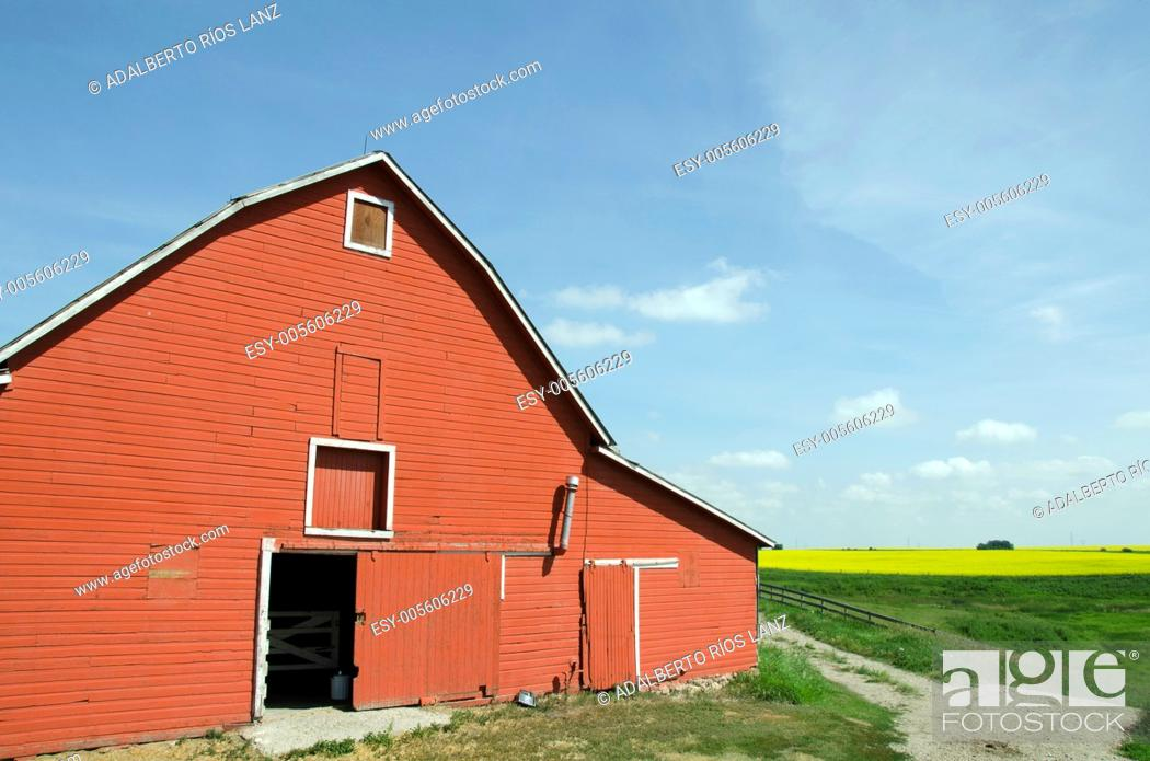 Stock Photo: Red barn in a canola field, Alberta, Canada.