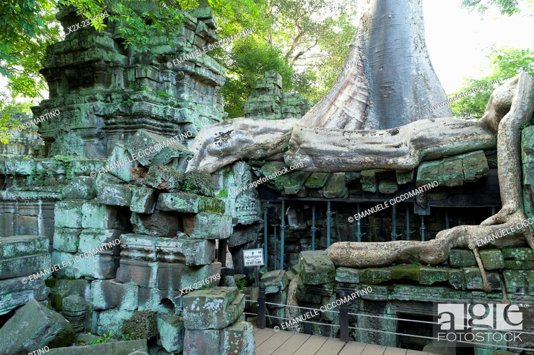 Stock Photo: Kapok tree growing in the ruins of Preah Khan Temple, UNESCO World Heritage Site, Angkor, Siem Reap, Cambodia, Indochina, Southeast Asia, Asia.