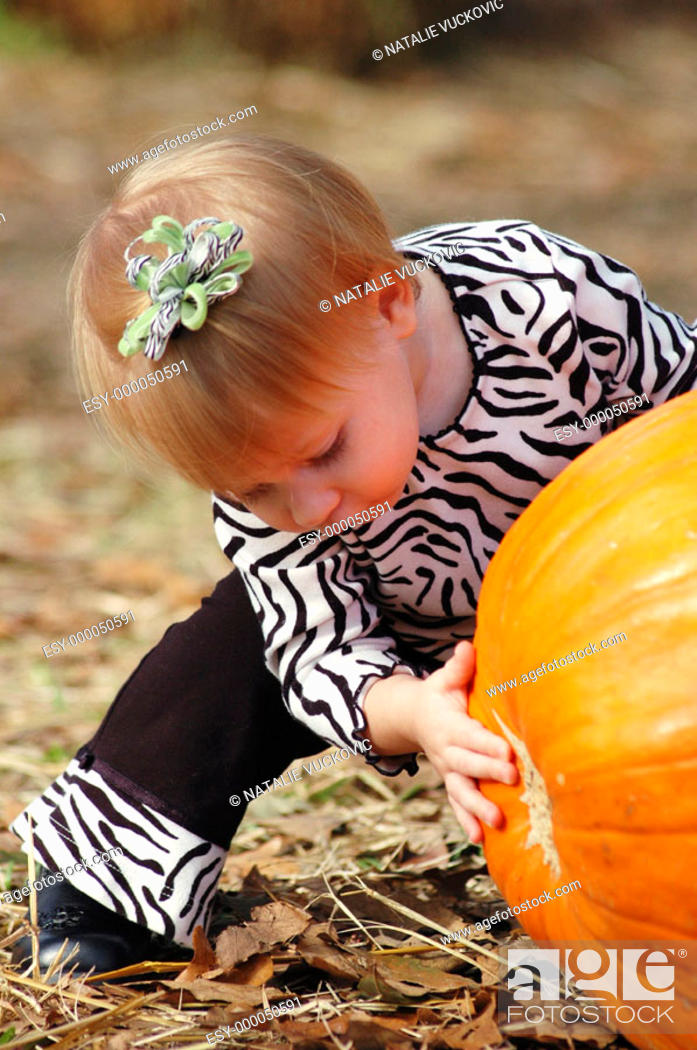 Stock Photo: Toddler looking under the pumpkin at the pumkin patch.