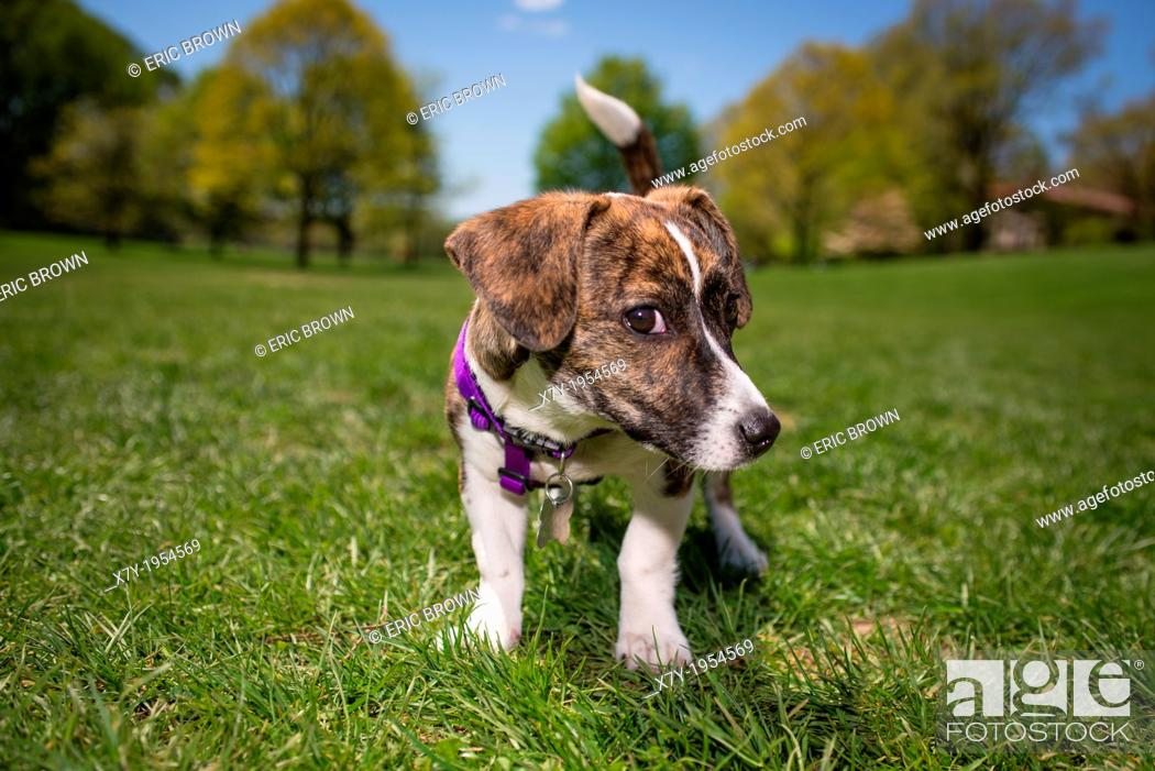 Stock Photo: A puppy in a park.