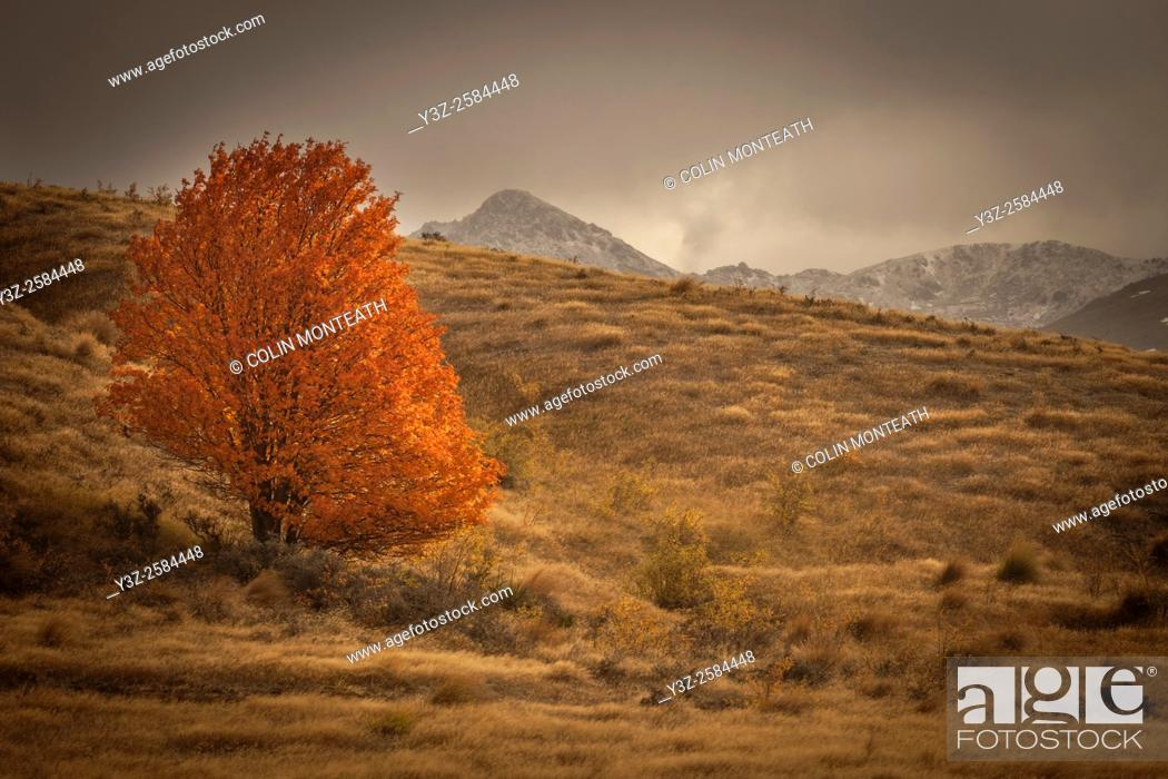 Stock Photo: Lone tree in autumn colours, storm engulfs Nevis valley, Otago.