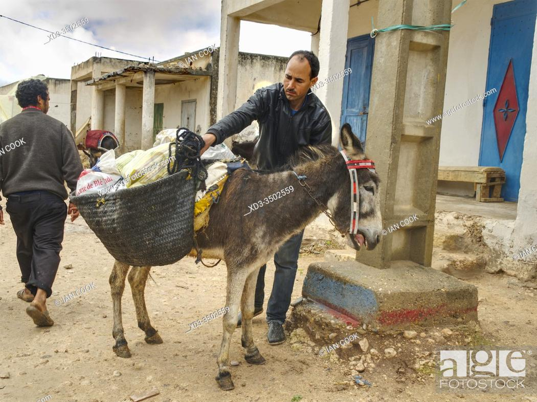 Stock Photo: man loading saddle bags on his donkey at the market in Ida Ougourd Market, near Essaouira, Morocco.
