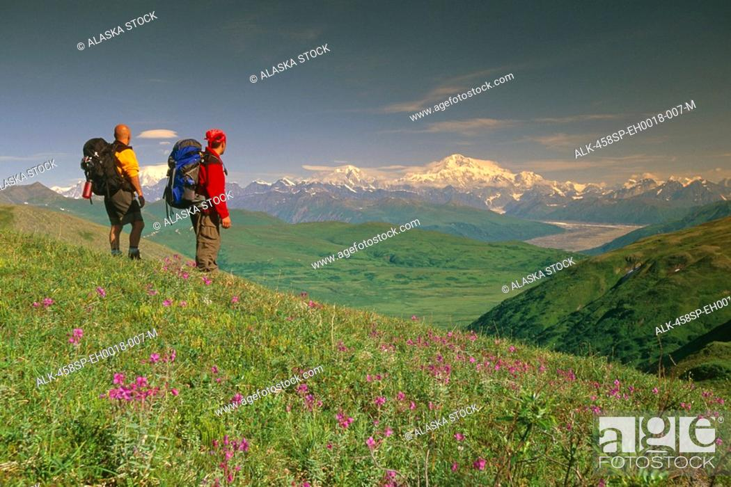 Stock Photo: Hikers on Tundra in Denali State Park SC Alaska Summer w/Mt McKinley background.