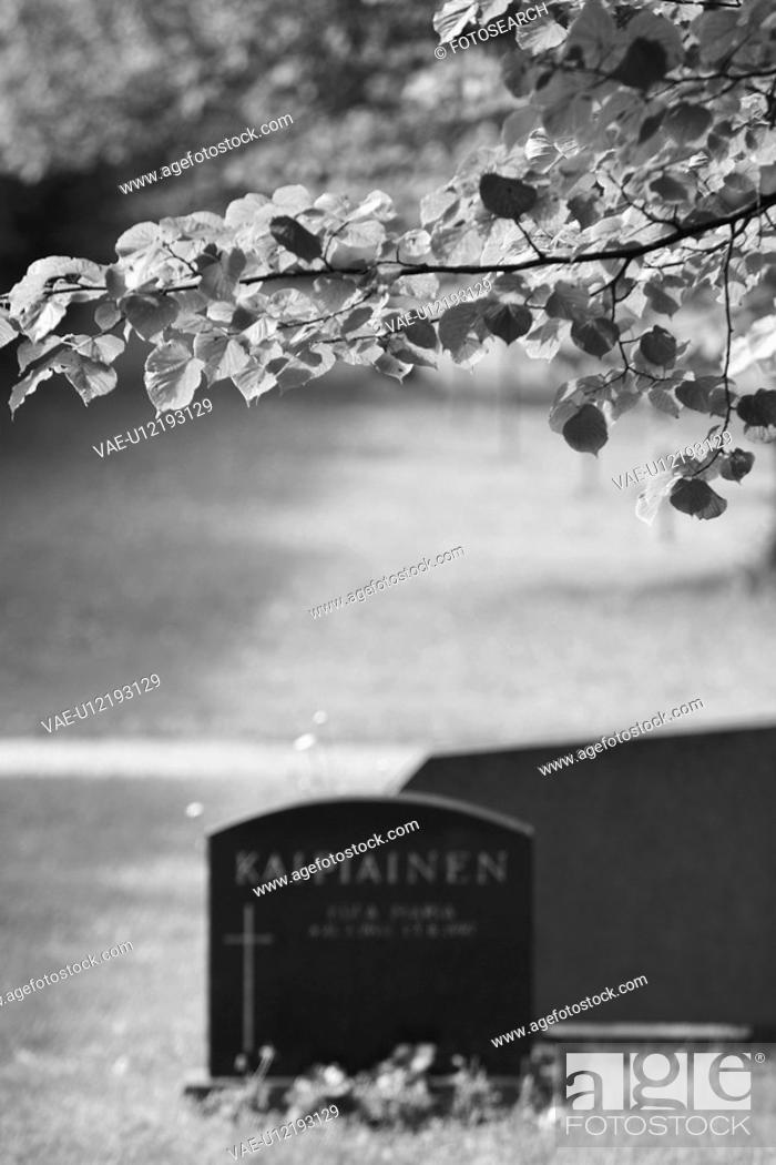 Stock Photo: Black And White, Cemetery, Close-Up, Day, Focus On Foreground, Leaves.