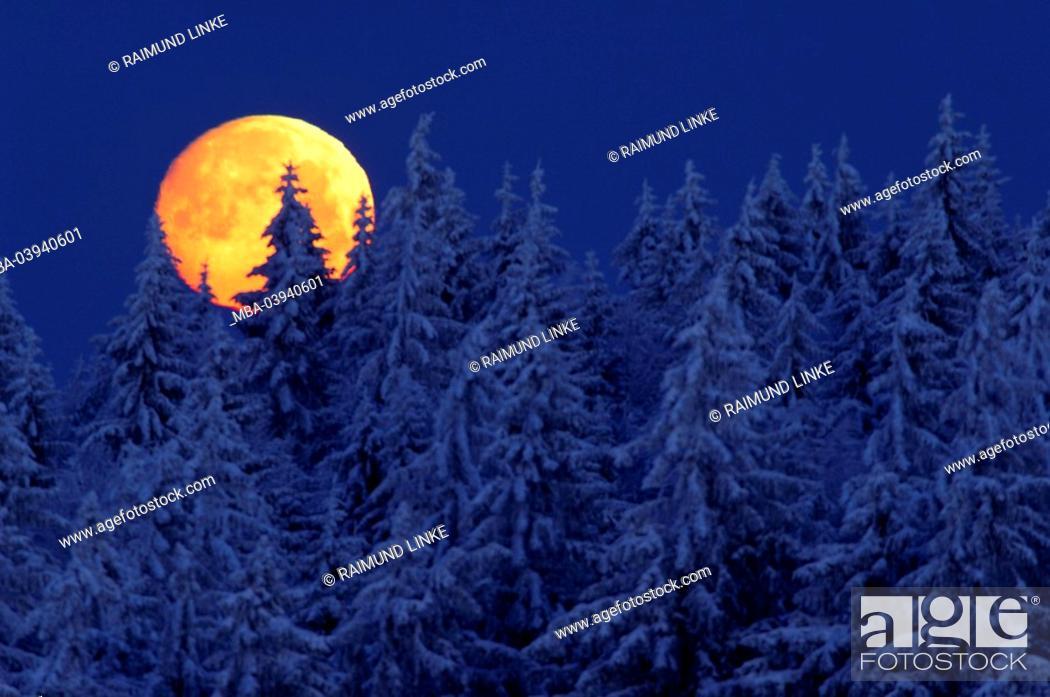 Stock Photo: Full moon, conifers, snow, night,.