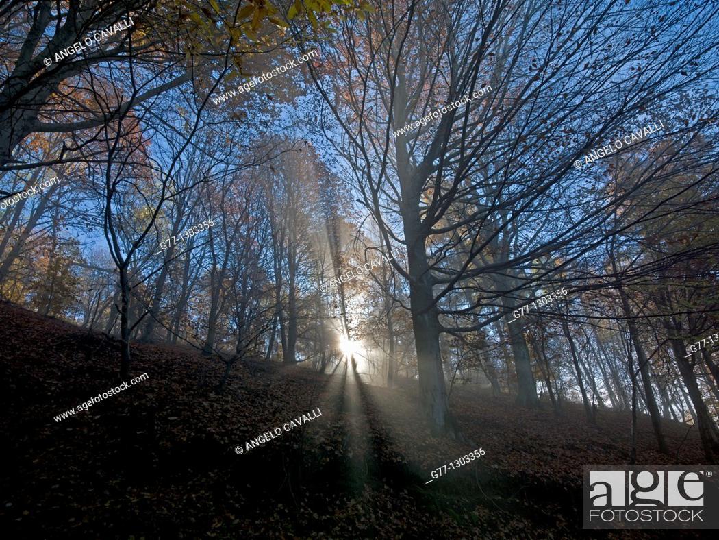 Stock Photo: Autumn in Italian Alps, Stresa, Lake Maggiore, Piedmont, Italy.