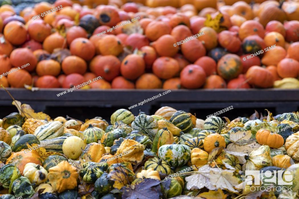 Stock Photo: different kinds of pumpkins, autumn market, Austria.