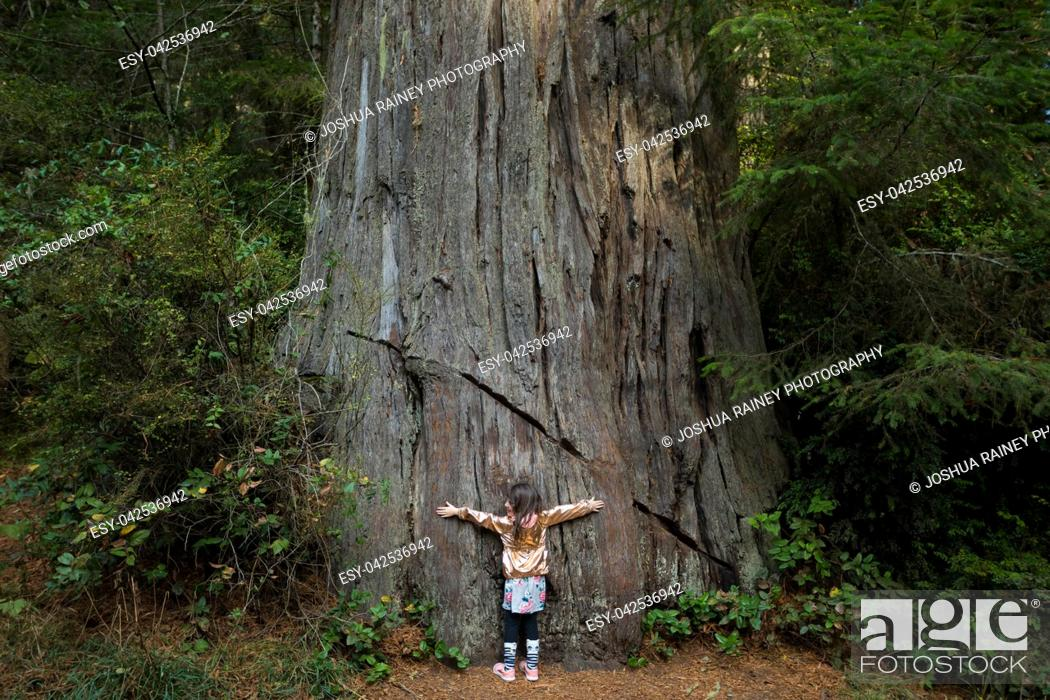 Stock Photo: Young girl hugging a large tree along the Lady Bird Johnson Grove Trail in the California Redwoods National Park in coastal Northwest California.