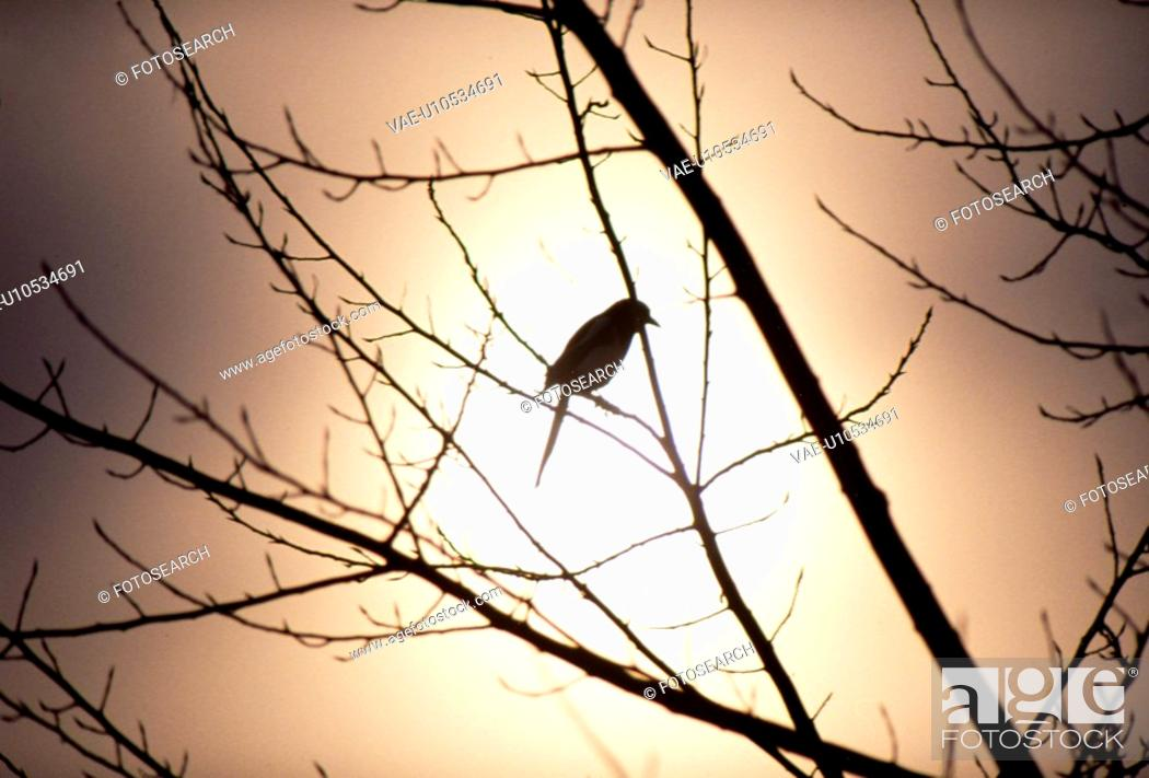 Stock Photo: sunset, nature, branch, tree, scene, glow, landscape.