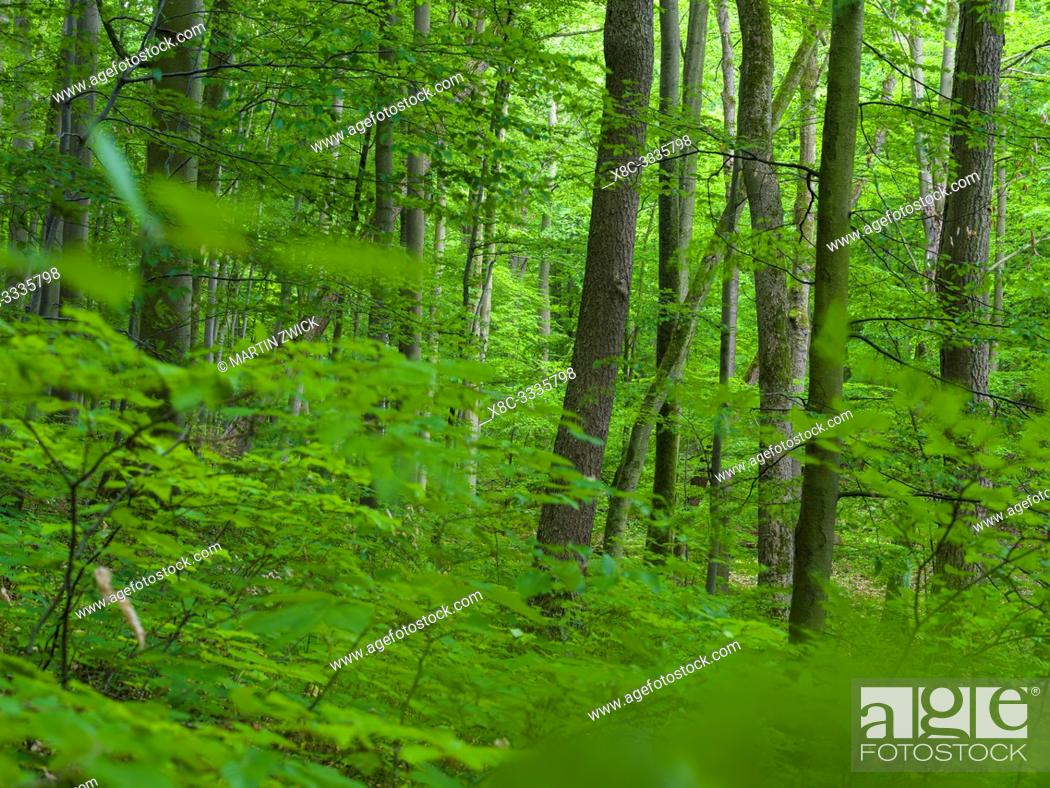 Stock Photo: The woodland Hainich in Thuringia, National Park and part of the UNESCO world heritage - Primeval Beech Forests of the Carpathians and the Ancient Beech Forests.