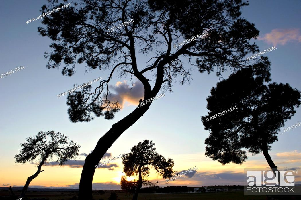 Stock Photo: Los Pandos estate, Almansa, Albacete province, Castilla-La Mancha, Spain.
