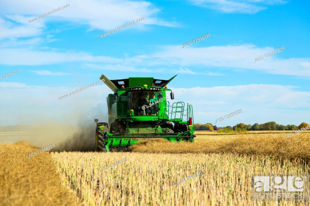 Stock Photo: A father and son harvesting canola together using a combine on the family farm; Legal, Alberta, Canada.