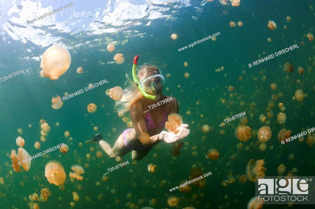 Stock Photo: Snorkeling in Jellyfish Lake, Mastigias papua etpisonii, Jellyfish Lake, Micronesia, Palau.