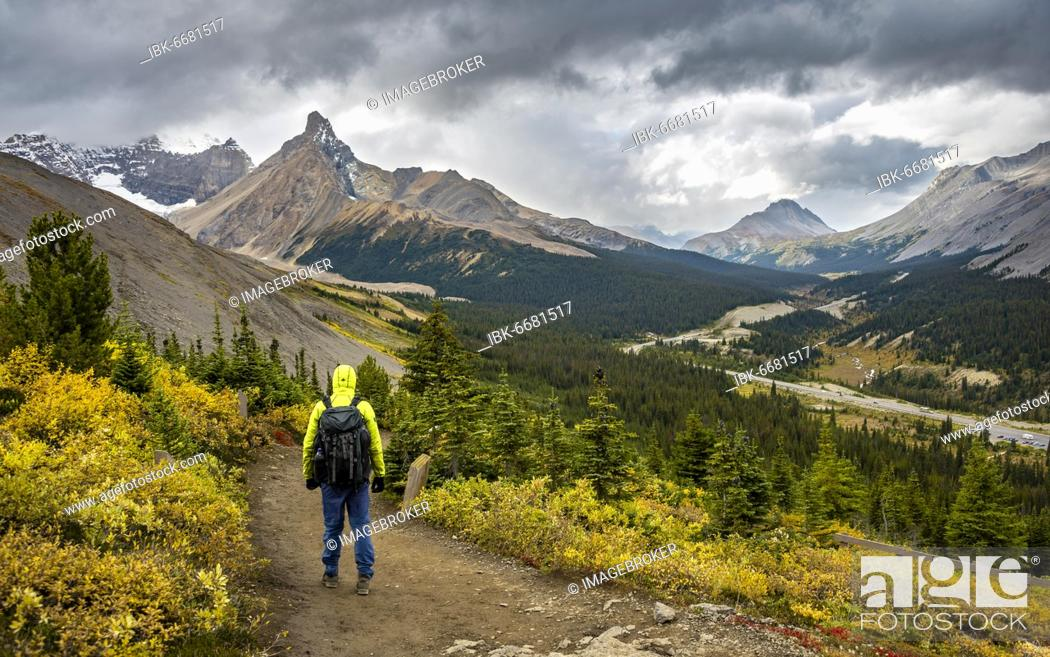 Stock Photo: Hiker between autumnal bushes, view of Sunwapta Pass, mountain landscape and glaciers in autumn, mountains Hilda Peak and Mount Wilcox, Parker Ridge.
