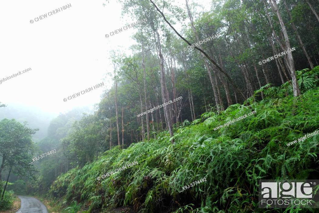 Stock Photo: Mount Matang forest path to Sri Maha Mariamman Temple, Hindu Temple, Kuching, Sarawak, Borneo.