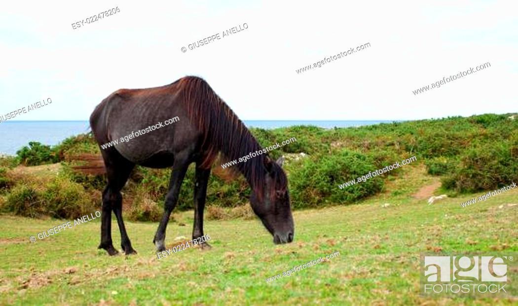 Stock Photo: Herd of horses grazing.