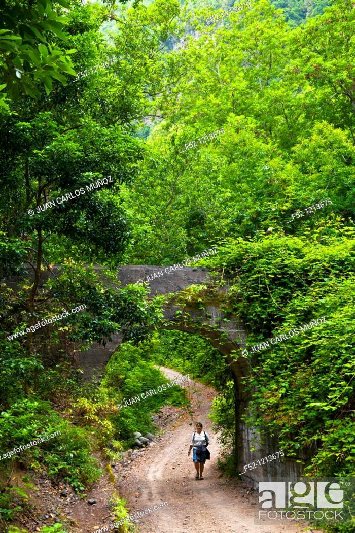 Stock Photo: Hiking, Laurel forest, Cubo de la Galga, La Galga, Parque Natural de las Nieves, La Palma Island, Santa Cruz province, Canary Islands, Spain.