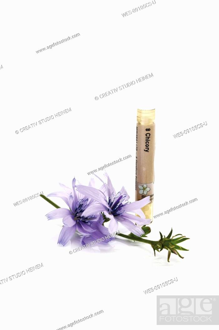 Stock Photo: Tube with Bach Flower Stock Remedy, Chicory Cichorium intybus.